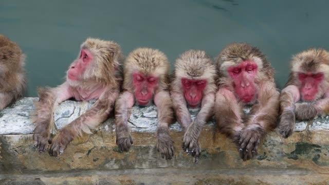 温泉猿の温泉 - 猿点の映像素材/bロール