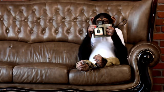 Monkey Photo Sofa video