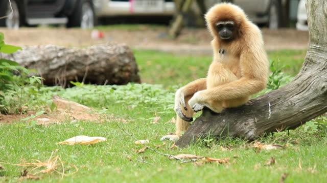 Monkey Entspannen – Video