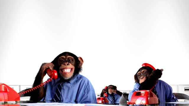 Monkey Service Department video