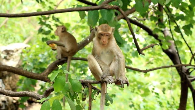 scimmie seduto sul ramo - reso video stock e b–roll