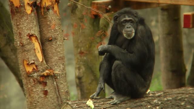 HD - Monkey Sitting video
