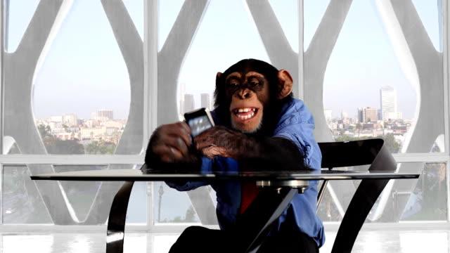 Monkey Smart Phone Los Angeles Office video