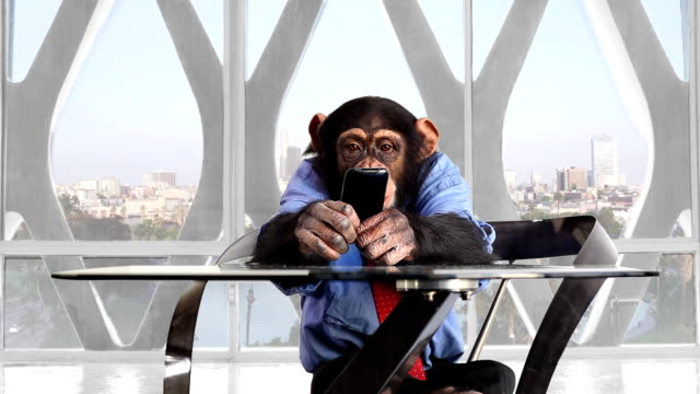 Monkey Smart Phone Los Angeles Office video