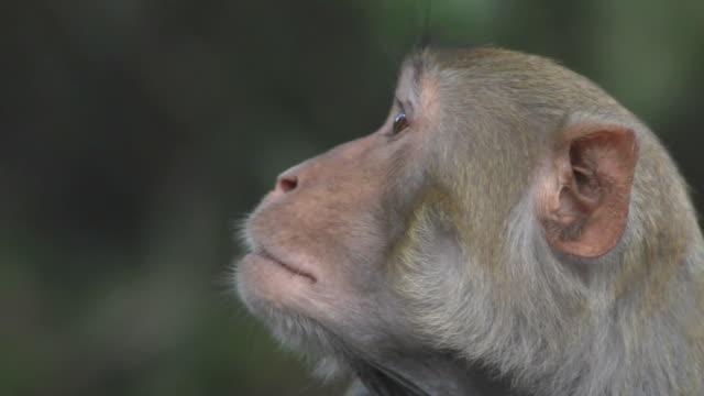 monkey. - makak maymunu stok videoları ve detay görüntü çekimi
