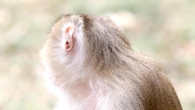 猿類 ビデオ