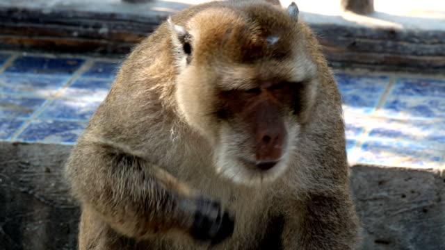 monkey. - großwild stock-videos und b-roll-filmmaterial