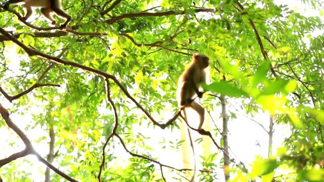 monkey – Video