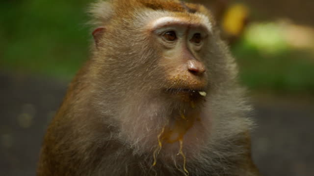 vídeos de stock, filmes e b-roll de macaco  - macaco