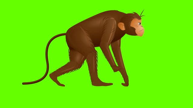 Monkey Walk cycle animation