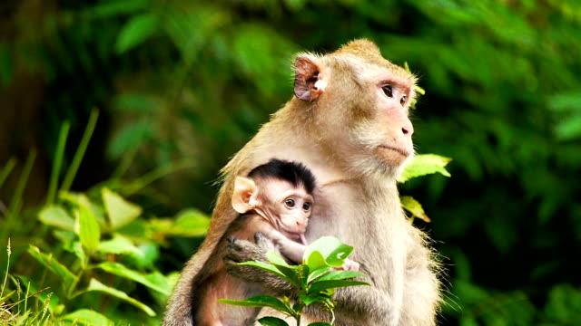 apa med ung baby i en öppen zoo cnglnat1094 - primat bildbanksvideor och videomaterial från bakom kulisserna