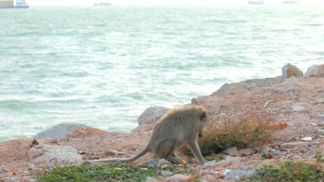apa, pattaya beach thailand - pattaya bildbanksvideor och videomaterial från bakom kulisserna