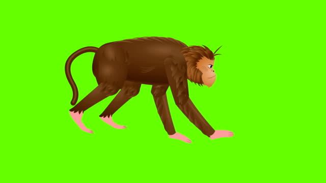 MonkeyRun cycle animation