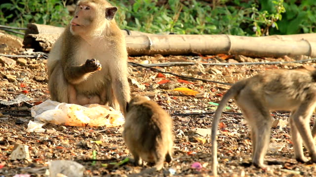 WS:Monkeys and families video