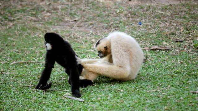 monkeys family video
