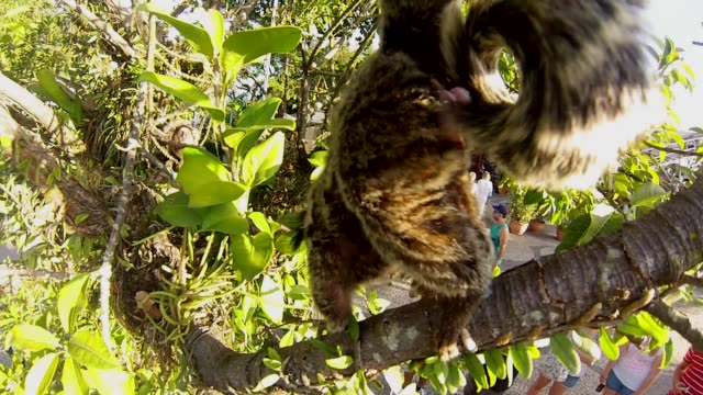 Monkeys playing at the Tree.