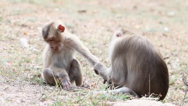 Monkeys  animal family stock videos & royalty-free footage