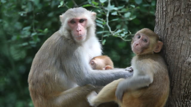 scimmie - reso video stock e b–roll