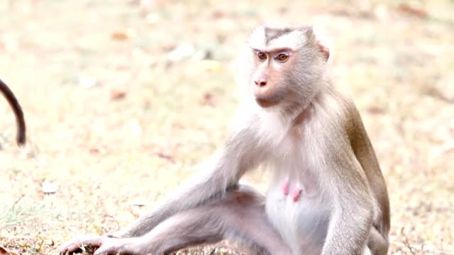 Monkeys Monkeys are finding flea on their skin. flea insect stock videos & royalty-free footage