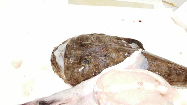 monkfish on fish market display - żabnicokształtne filmów i materiałów b-roll