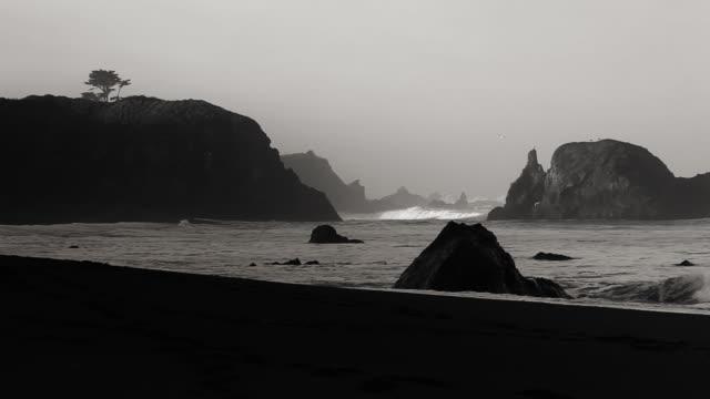 Monochromatic Sunrise, Northern California shoreline with bird and isolated tree video