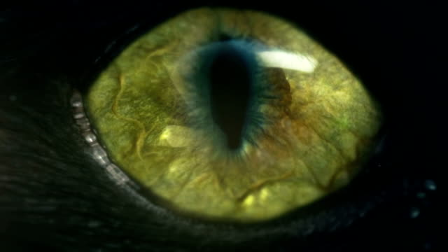 monster-eye – Video