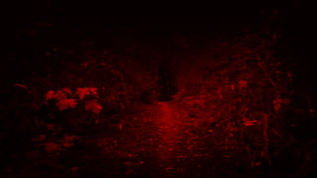 monster pov kör genom skogen - wolf bildbanksvideor och videomaterial från bakom kulisserna