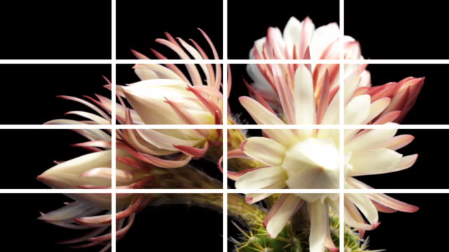 Montage Flowers Blooming video