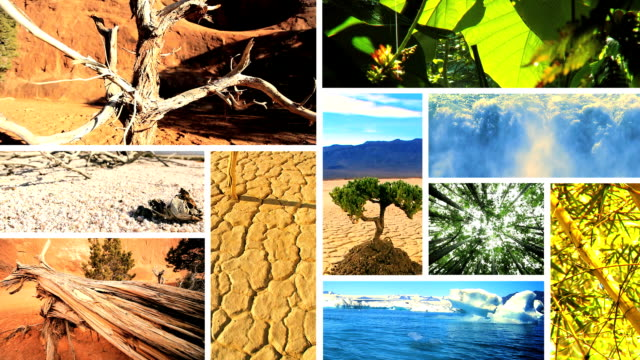 Montage Images of Green Vegetation & Barren Environments video