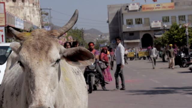 vídeos de stock e filmes b-roll de montagem: rajastan celebrações, holi na índia - holi