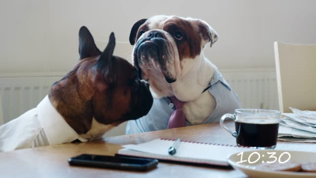 Montage of dogs working day in an office video