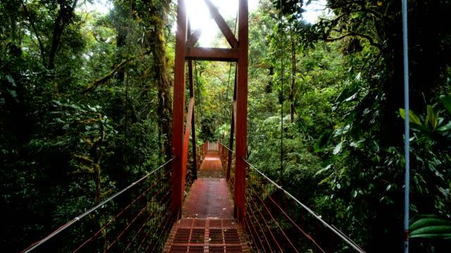 monteverde cloud forest, costa rica: canopy walk - ekoturystyka filmów i materiałów b-roll