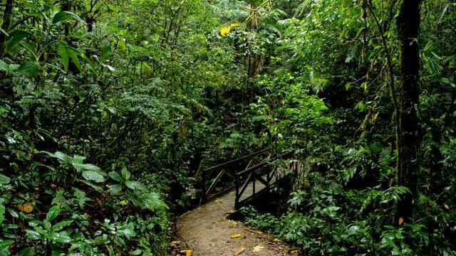 foresta pluviale di monteverde, costa rica - anfibio video stock e b–roll