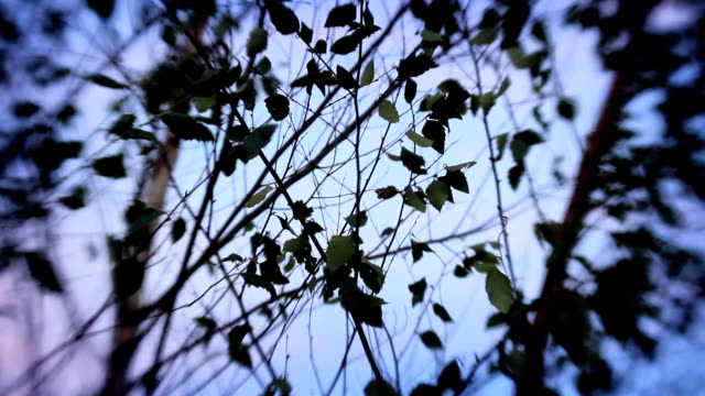 Moody Image of Tree Branches at Dusk, Selective Focus video