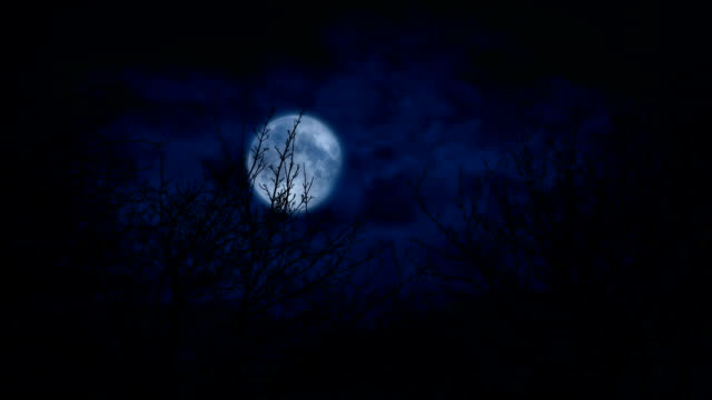 Moon Above Bare Woodland Trees Scary Scene Tree tops with full moon in the sky behind count dracula stock videos & royalty-free footage