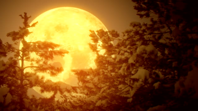 Moon and swaying pine trees with snow (loopable) video