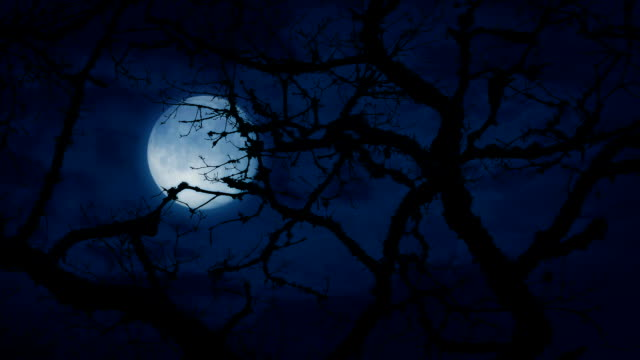 moon behind ancient gnarled tree branches - moon stock videos & royalty-free footage