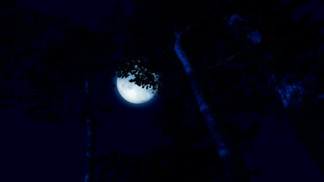 Moon Behind Tall Forest Trees In The Wind video