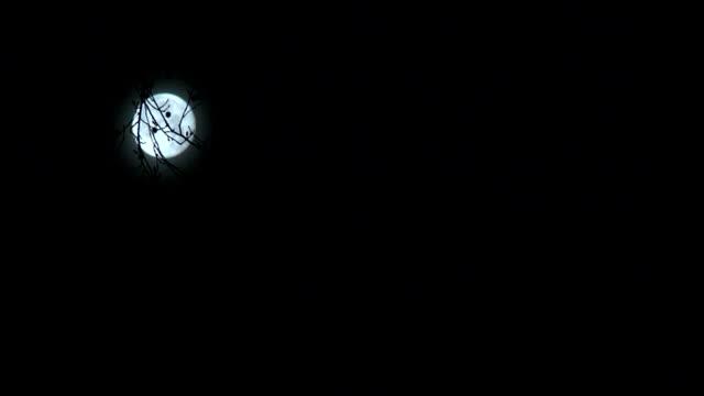 moon in trees - gren plantdel bildbanksvideor och videomaterial från bakom kulisserna
