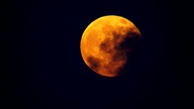 moon motion - wolf bildbanksvideor och videomaterial från bakom kulisserna