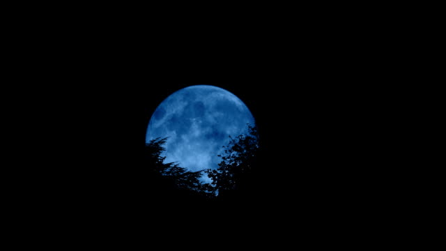 Moon Moving Behind The Trees Full moon moves behind trees moving in the wind vampire stock videos & royalty-free footage