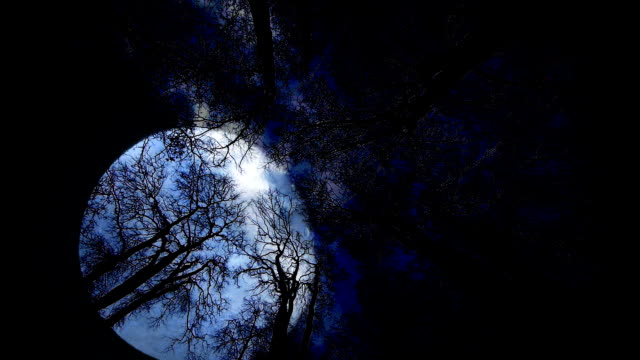 moon night background. spooky mysterious scary. trees silhouette video