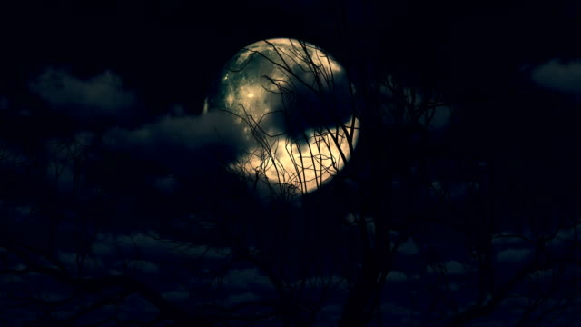 Moon rises through clouds and tree 4k