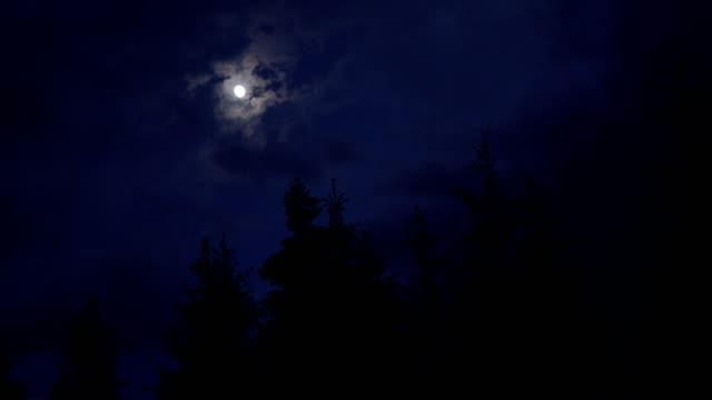 Moon shining above spruce trees