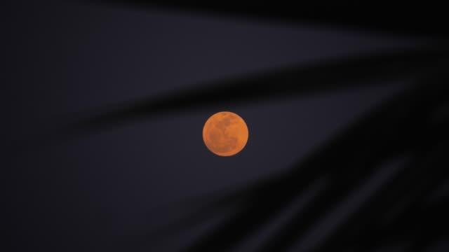月のヤシの木を - インドネシア点の映像素材/bロール