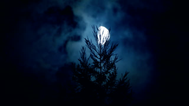 Moon with pines at nigh