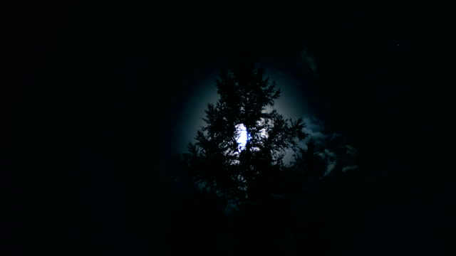 Moon with Tree at night