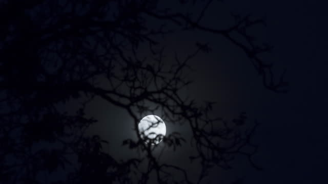 Moonrise full moon behind tree branches, time lapse