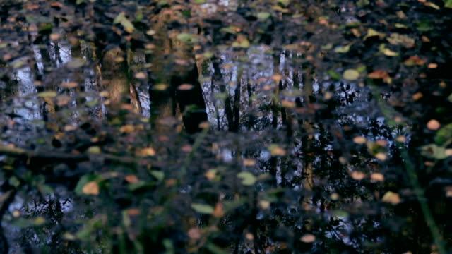 Moor im Wald video