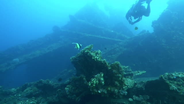 moorish idol and a scuba diver at the wreck of the liberty in tulamben bali - wrak statku filmów i materiałów b-roll